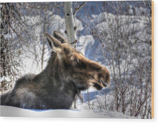 Moose On The Loose Wood Print