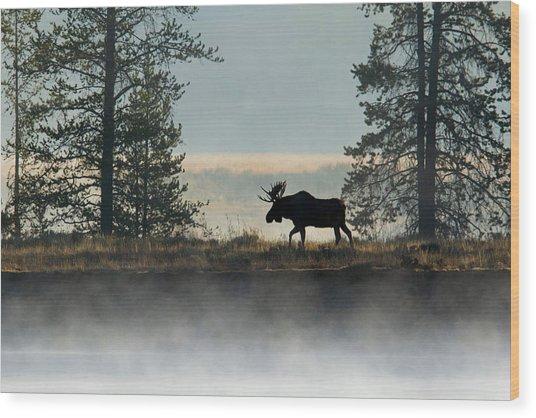 Moose Surprise Wood Print