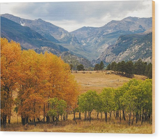 Moraine Park In Rocky Mountain National Park Wood Print