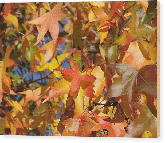More Autum Leaves Wood Print by Liz Vernand
