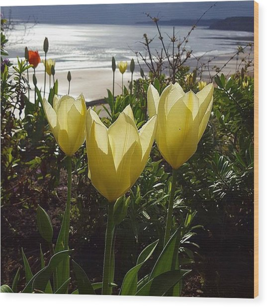 More Tulips At The #seaside Wood Print by Dante Harker