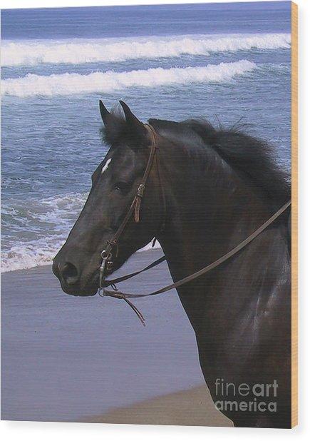 Morgan Head Horse On Beach Wood Print