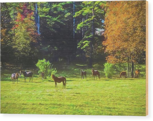Morgan Horses In Autumn Pasture Wood Print