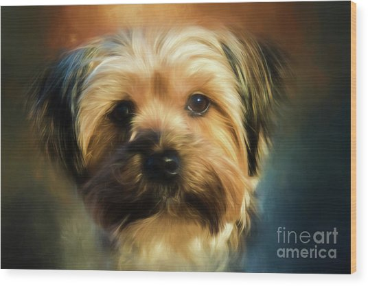 Morkie Portrait Wood Print