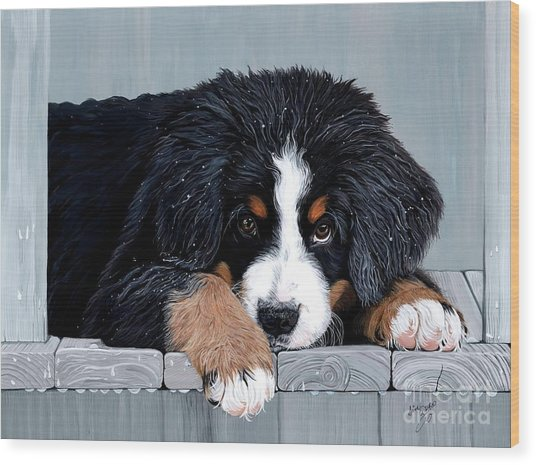 Morning Dew - Bernese Mountain Dog Wood Print