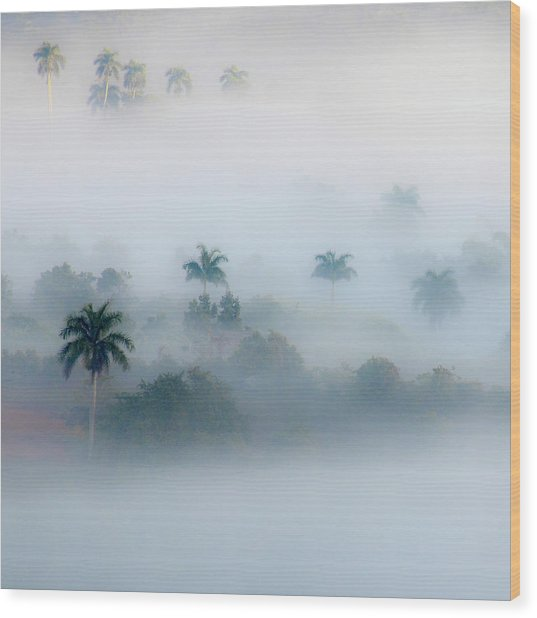 Morning Fog, Vinales Valley Wood Print