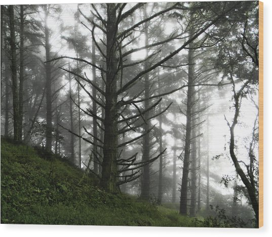 Wood Print featuring the photograph Morning Forest Fog II by Pacific Northwest Imagery