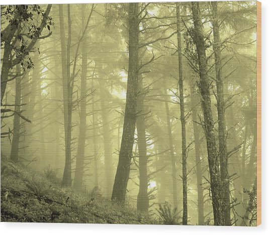 Wood Print featuring the photograph Morning Forest Fog by Pacific Northwest Imagery