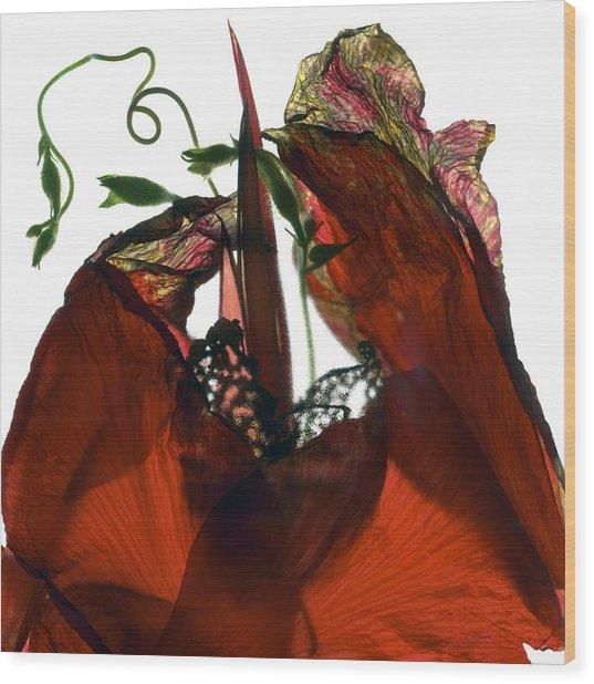 Morning Glory Canna Red Wood Print