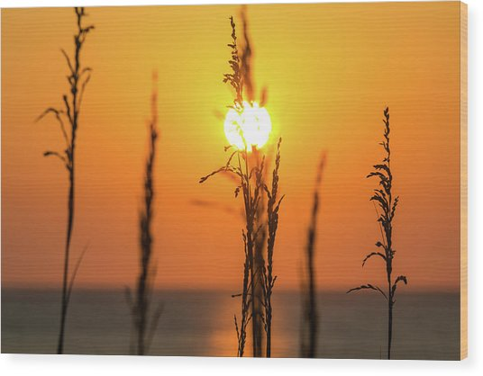 Morning Glow Wood Print by AM Photography