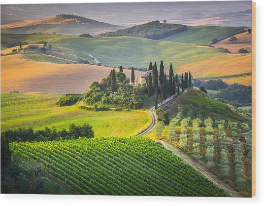 Morning In Tuscany Wood Print