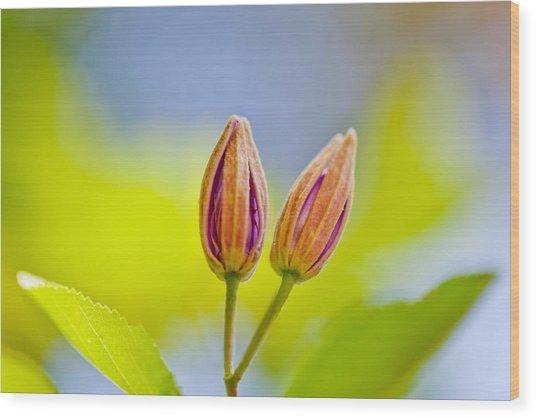 Morning Joy Wood Print