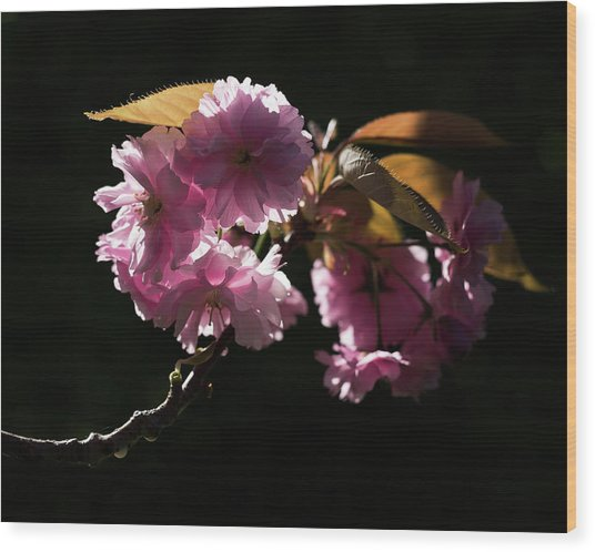 Wood Print featuring the photograph Morning Light by Helga Novelli
