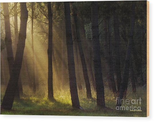 Morning Light In The Forest Wood Print