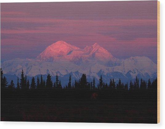 Morning Light On Denali Wood Print