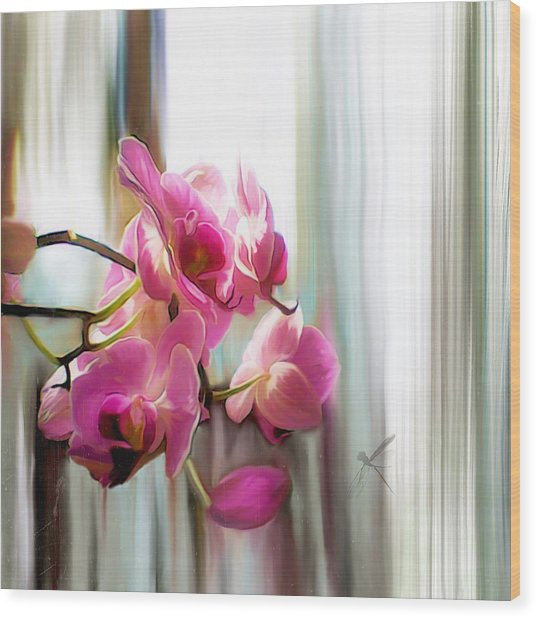 Morning Light Orchids Wood Print