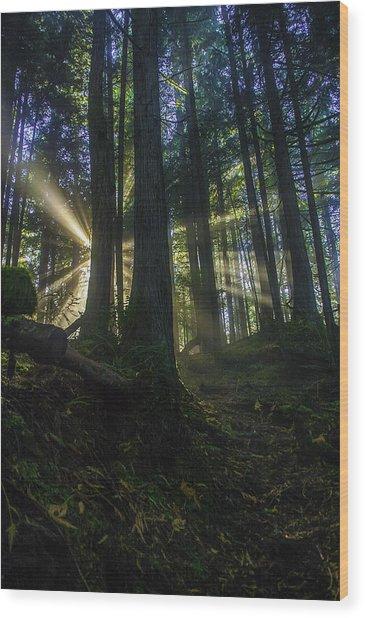 Morning Light Rays Wood Print