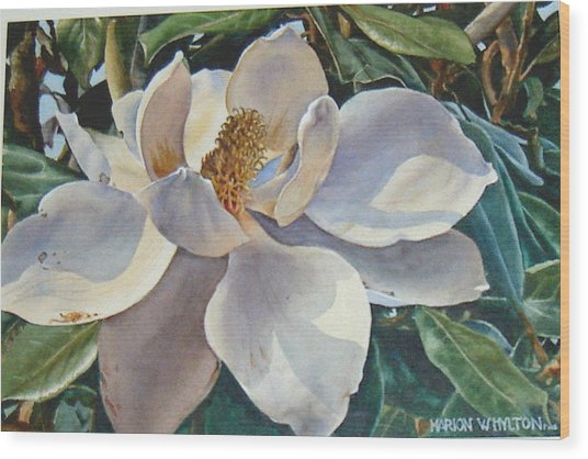 Morning Magnolia Wood Print by Marion  Hylton