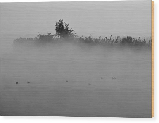 Morning Mist At Wetland Of Harike Wood Print
