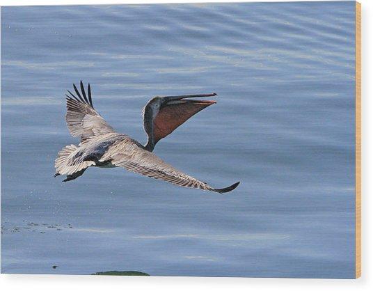Morning Pelican Wood Print