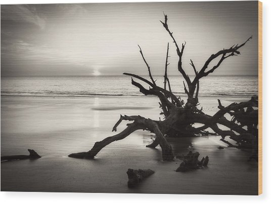 Morning Sun On Driftwood Beach In Black And White Wood Print