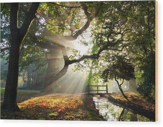 Morning Sunrise In Hampden Park Wood Print