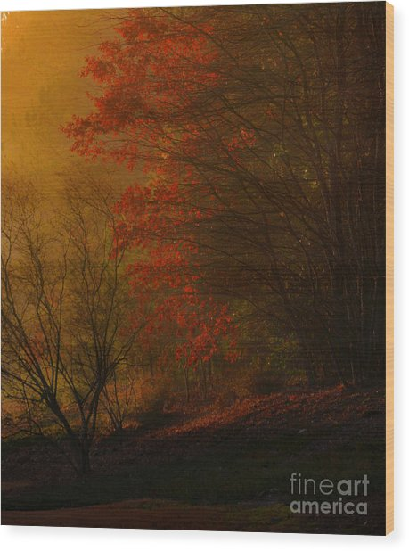 Morning Sunrise With Fog Touching The Tree Tops In Georgia. Wood Print