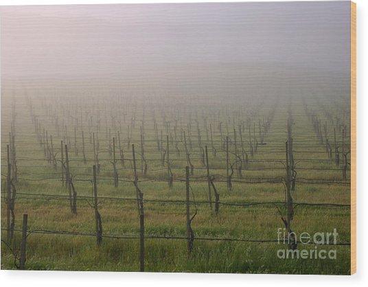 Morning Vineyard Wood Print