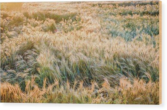 Morning Wheat Wood Print