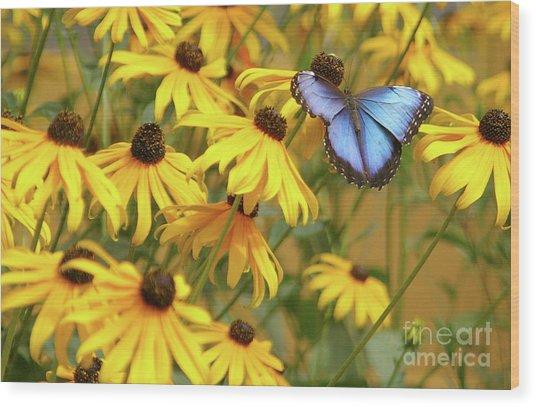 Morpho Butterfly Wood Print