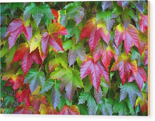 Moselle Valley Leaves Wood Print