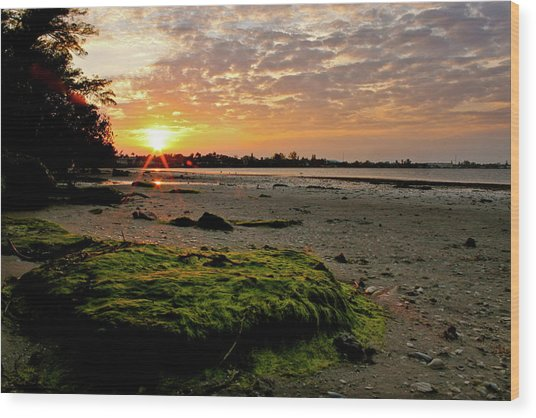 Moss On The Beach Wood Print by Angie Wingerd