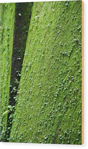 Moss Wood Print by Pramod Bansode