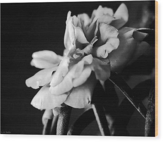 Moss Rose I Wood Print