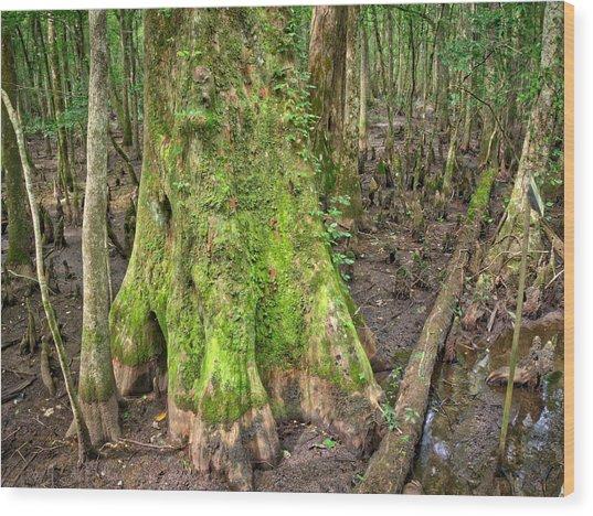 Mossy Cypress Wood Print