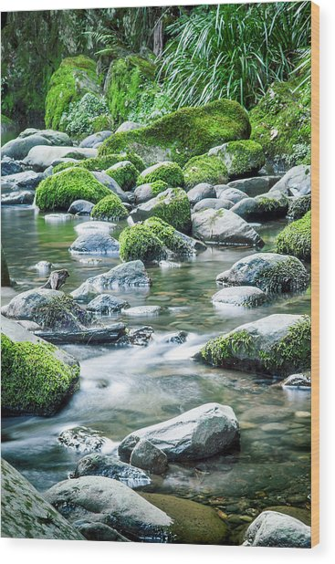 Mossy Forest Stream Wood Print