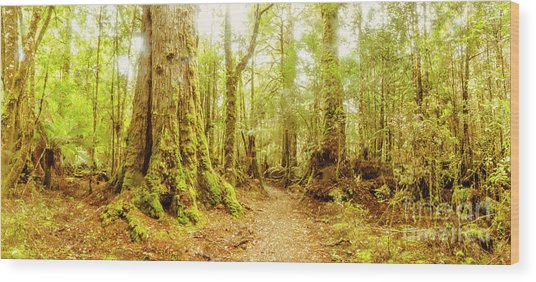 Mossy Forest Trails Wood Print
