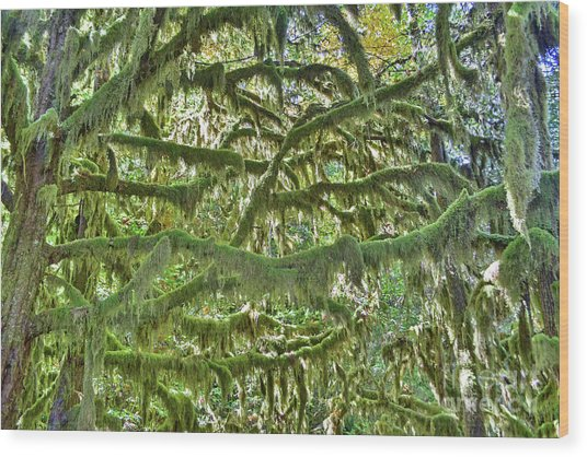 Mossy Maze Wood Print