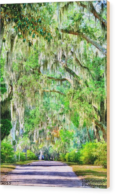 Wood Print featuring the photograph Mossy Oak Pathway H D R by Lisa Wooten
