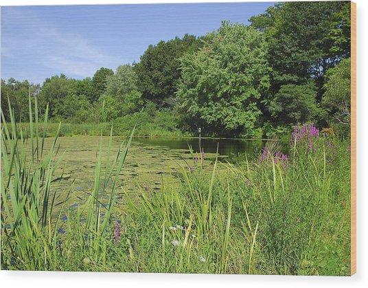 Mossy Pond Wood Print