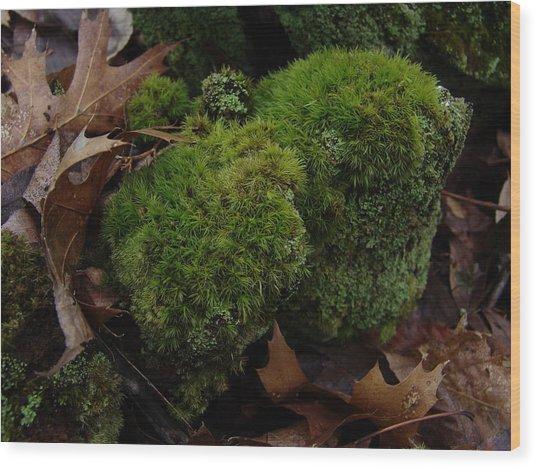 Mossy Wood 001 Wood Print by Ryan Vaal