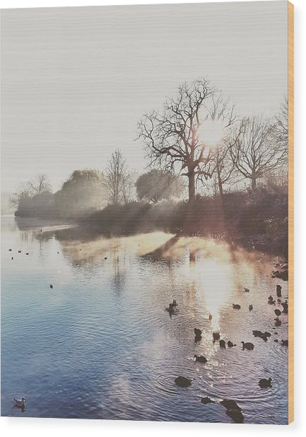 Mote Park Winter Morning  Wood Print by Stuart Ellesmere