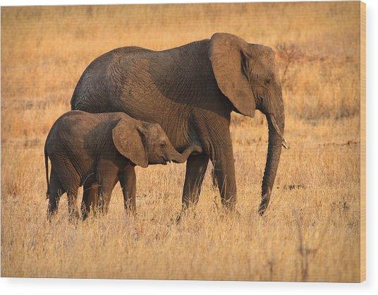 Mother And Baby Elephants Wood Print