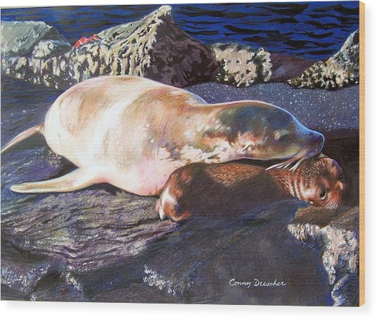 Mother And Child Sea Lion Wood Print