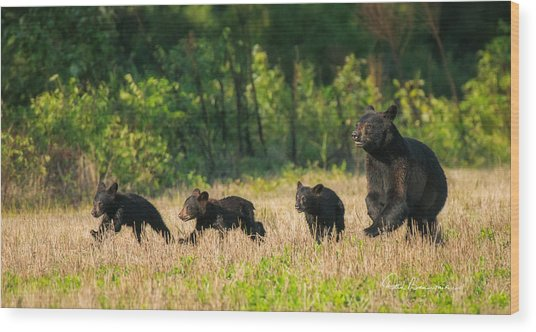 Mother Black Bear And Three Cubs 7006 Wood Print
