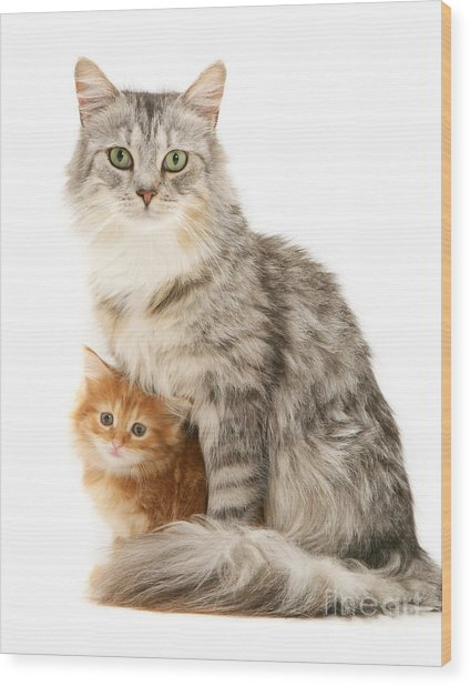 Mother Cat And Ginger Kitten Wood Print