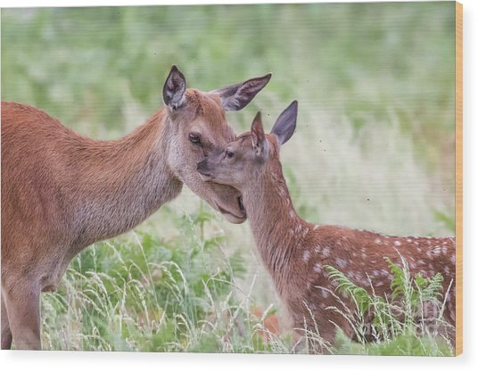 Wood Print featuring the photograph Mothers Love by Paul Farnfield