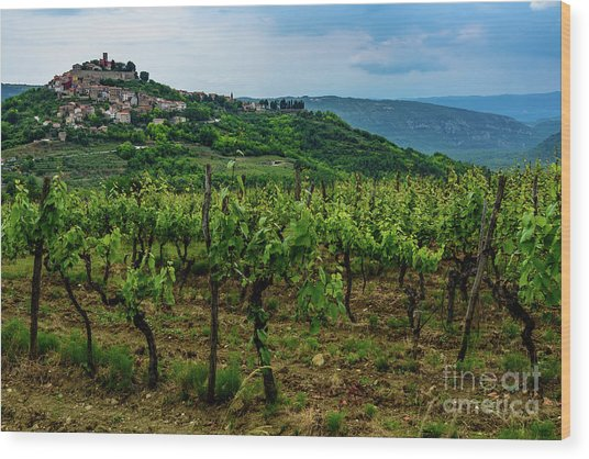 Motovun And Vineyards - Istrian Hill Town, Croatia Wood Print