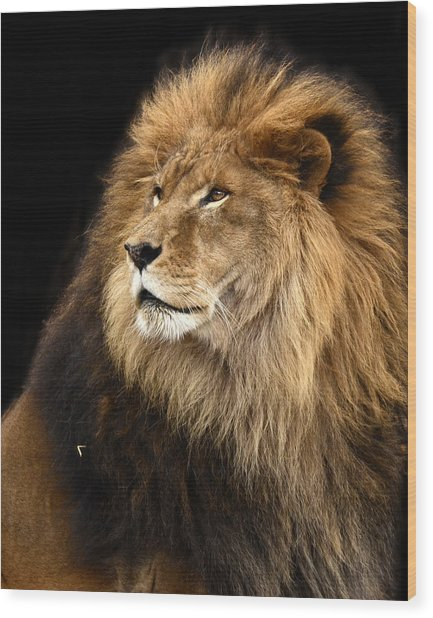 Moufasa The Lion Wood Print