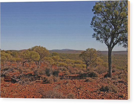 Mount Gibson Station Wa Wood Print by Tony Brown